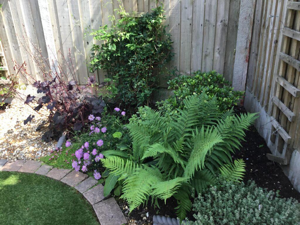 Jacks-garden-border