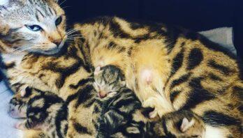 Sybil-kittens
